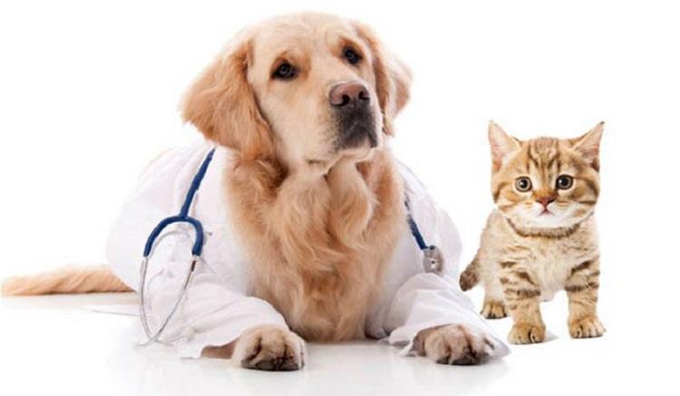 ویستا / دامپزشکی در شریعتی