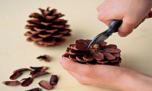 ایده های هنری خلاقانه با میوه کاج
