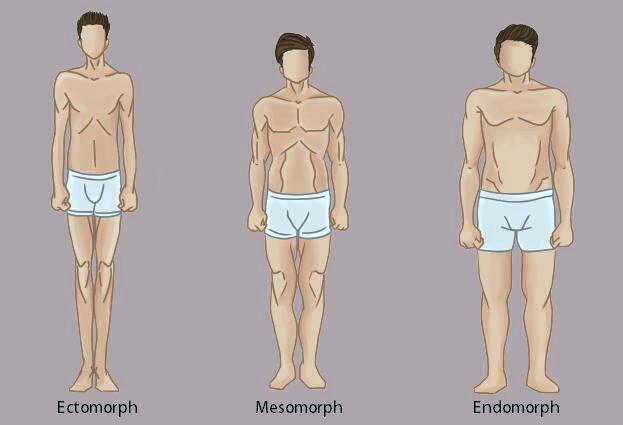 انواع فرم بدن در بدنسازی