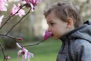 ارتباطی معنادار بین حس بویایی و حس جهت یابی